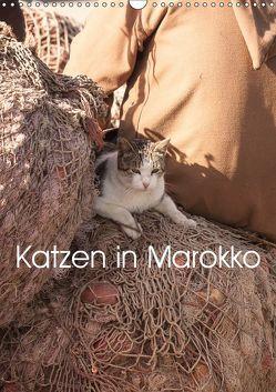 Katzen in Marokko (Wandkalender 2019 DIN A3 hoch) von Klein + Andreas Lauermann,  Anja