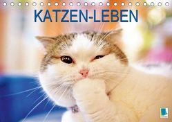 Katzen-Leben: Lustiger Haustiger (Tischkalender 2019 DIN A5 quer) von CALVENDO