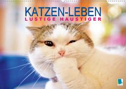 Katzen-Leben: Lustiger Haustiger (Premium, hochwertiger DIN A2 Wandkalender 2020, Kunstdruck in Hochglanz) von CALVENDO