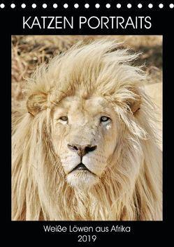 KATZEN PORTRAITS Weiße Löwen aus Afrika (Tischkalender 2019 DIN A5 hoch) von N.,  N.