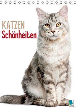 Katzen-Schönheiten (Tischkalender 2019 DIN A5 hoch) von CALVENDO