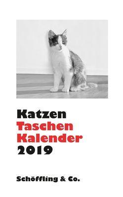 Katzen Taschenkalender 2019 von Bachstein,  Julia