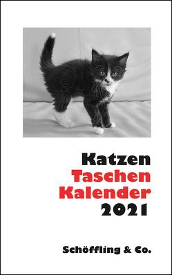 Katzen Taschenkalender 2021 von Bachstein,  Julia