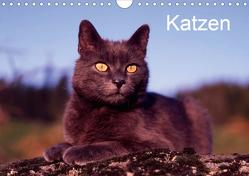 Katzen (Wandkalender 2021 DIN A4 quer) von / Werner Layer,  McPHOTO