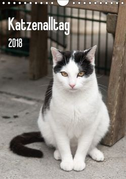 Katzenalltag 2018 (Wandkalender 2018 DIN A4 hoch) von Scholz,  Daniela