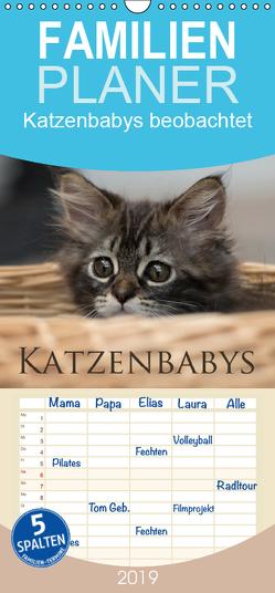 Katzenbabys beobachtet – Familienplaner hoch (Wandkalender 2019 , 21 cm x 45 cm, hoch) von calmbacher,  Christiane