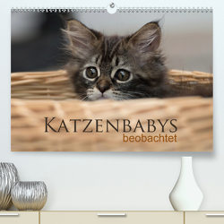 Katzenbabys beobachtet (Premium, hochwertiger DIN A2 Wandkalender 2020, Kunstdruck in Hochglanz) von calmbacher,  Christiane
