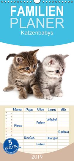 Katzenbabys – Familienplaner hoch (Wandkalender 2019 , 21 cm x 45 cm, hoch) von Hesch-Foto