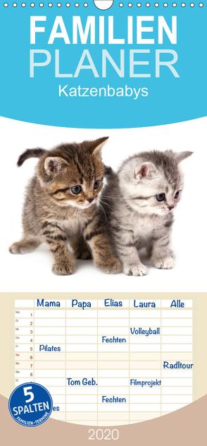 Katzenbabys – Familienplaner hoch (Wandkalender 2020 , 21 cm x 45 cm, hoch) von Hesch-Foto