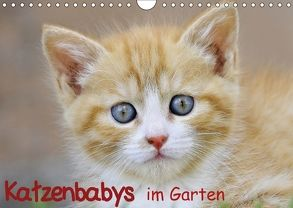 Katzenbabys im Garten (Wandkalender 2018 DIN A4 quer) von Jazbinszky,  Ivan