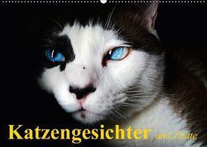 Katzengesichter und Zitate (Wandkalender 2018 DIN A2 quer) von Stanzer,  Elisabeth