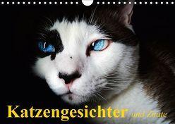 Katzengesichter und Zitate (Wandkalender 2019 DIN A4 quer) von Stanzer,  Elisabeth
