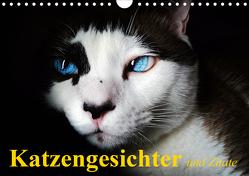 Katzengesichter und Zitate (Wandkalender 2020 DIN A4 quer) von Stanzer,  Elisabeth