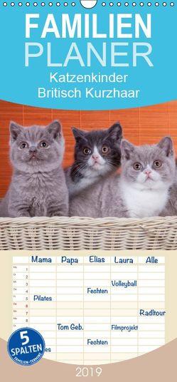 Katzenkinder Britisch Kurzhaar – Familienplaner hoch (Wandkalender 2019 , 21 cm x 45 cm, hoch) von Wejat-Zaretzke,  Gabriela