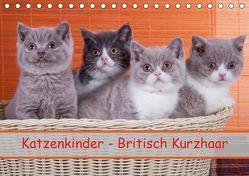 Katzenkinder Britisch Kurzhaar (Tischkalender 2019 DIN A5 quer) von Wejat-Zaretzke,  Gabriela