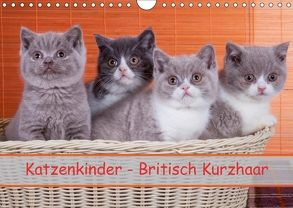 Katzenkinder Britisch Kurzhaar (Wandkalender 2018 DIN A4 quer) von Wejat-Zaretzke,  Gabriela