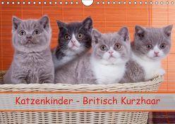 Katzenkinder Britisch Kurzhaar (Wandkalender 2019 DIN A4 quer) von Wejat-Zaretzke,  Gabriela