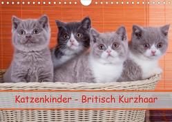 Katzenkinder Britisch Kurzhaar (Wandkalender 2020 DIN A4 quer) von Wejat-Zaretzke,  Gabriela