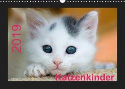 Katzenkinder (Wandkalender 2019 DIN A3 quer) von Weirauch,  Michael