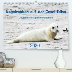 Kegelrobben auf der Insel Düne (Premium, hochwertiger DIN A2 Wandkalender 2020, Kunstdruck in Hochglanz) von Wilhelm,  N.