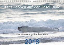 Kegelrobben auf der Insel Düne (Wandkalender 2018 DIN A4 quer) von Wilhelm,  N.