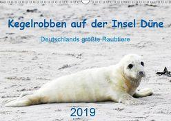 Kegelrobben auf der Insel Düne (Wandkalender 2019 DIN A3 quer)