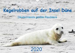 Kegelrobben auf der Insel Düne (Wandkalender 2020 DIN A3 quer) von Wilhelm,  N.