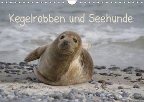 Kegelrobben und Seehunde (Wandkalender 2018 DIN A4 quer) von Lindert-Rottke,  Antje