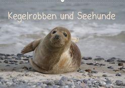 Kegelrobben und Seehunde (Wandkalender 2019 DIN A2 quer) von Lindert-Rottke,  Antje
