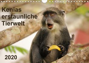 Kenias erstaunliche Tierwelt (Wandkalender 2020 DIN A4 quer) von Demel,  Andreas