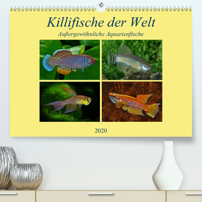 Killifische der WeltCH-Version (Premium, hochwertiger DIN A2 Wandkalender 2020, Kunstdruck in Hochglanz) von Pohlmann,  Rudolf