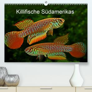 Killifische Südamerikas (Premium, hochwertiger DIN A2 Wandkalender 2020, Kunstdruck in Hochglanz) von Pohlmann,  Rudolf