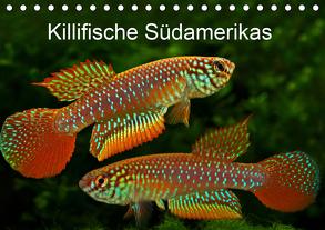 Killifische Südamerikas (Tischkalender 2020 DIN A5 quer) von Pohlmann,  Rudolf