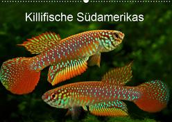 Killifische Südamerikas (Wandkalender 2019 DIN A2 quer) von Pohlmann,  Rudolf