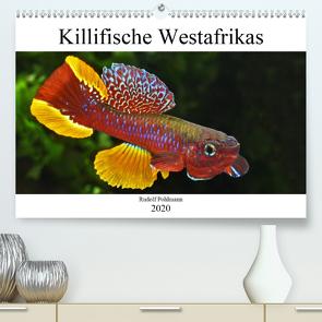 Killifische Westafrikas (Premium, hochwertiger DIN A2 Wandkalender 2020, Kunstdruck in Hochglanz) von Pohlmann,  Rudolf