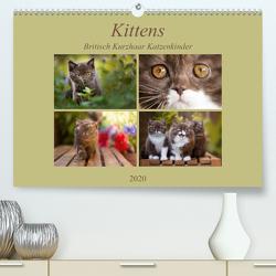 Kittens – Britisch Kurzhaar Katzenkinder (Premium, hochwertiger DIN A2 Wandkalender 2020, Kunstdruck in Hochglanz) von Bürger,  Janina