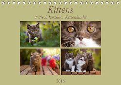 Kittens – Britisch Kurzhaar Katzenkinder (Tischkalender 2018 DIN A5 quer) von Bürger,  Janina