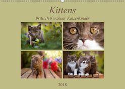 Kittens – Britisch Kurzhaar Katzenkinder (Wandkalender 2018 DIN A2 quer) von Bürger,  Janina