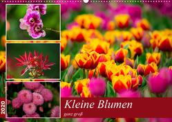 Kleine Blumen ganz groß (Wandkalender 2020 DIN A2 quer) von Reznicek,  M.