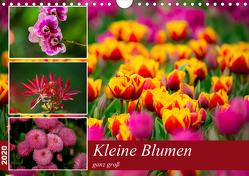 Kleine Blumen ganz groß (Wandkalender 2020 DIN A4 quer) von Reznicek,  M.