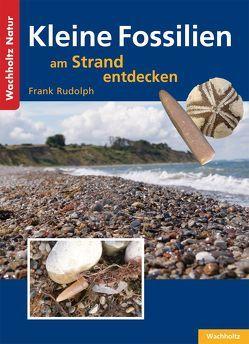 Kleine Fossilien am Strand entdecken von Rudolph,  Frank