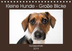 Kleine Hunde – Große Blicke (Tischkalender 2019 DIN A5 quer) von Akrema-Photography