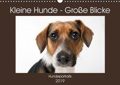 Kleine Hunde – Große Blicke (Wandkalender 2019 DIN A3 quer) von Akrema-Photography
