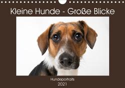 Kleine Hunde – Große Blicke (Wandkalender 2021 DIN A4 quer) von Akrema-Photography