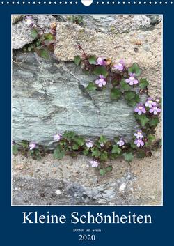 Kleine Schönheiten an Stein (Wandkalender 2020 DIN A3 hoch) von Zapf,  Gabi