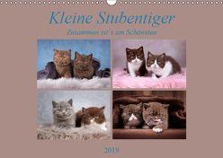 Kleine Stubenstiger (Wandkalender 2019 DIN A3 quer) von Bürger,  Janina