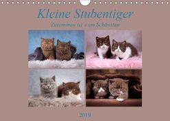 Kleine Stubenstiger (Wandkalender 2019 DIN A4 quer) von Bürger,  Janina