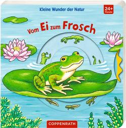 Kleine Wunder der Natur: Vom Ei zum Frosch von Brauer,  Sybille