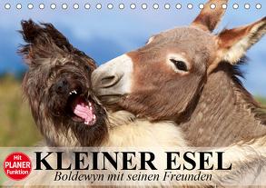Kleiner Esel. Boldewyn mit seinen Freunden (Tischkalender 2020 DIN A5 quer) von Stanzer,  Elisabeth