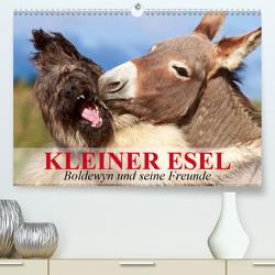 Kleiner Esel. Boldewyn und seine Freunde (Premium, hochwertiger DIN A2 Wandkalender 2020, Kunstdruck in Hochglanz) von Stanzer,  Elisabeth